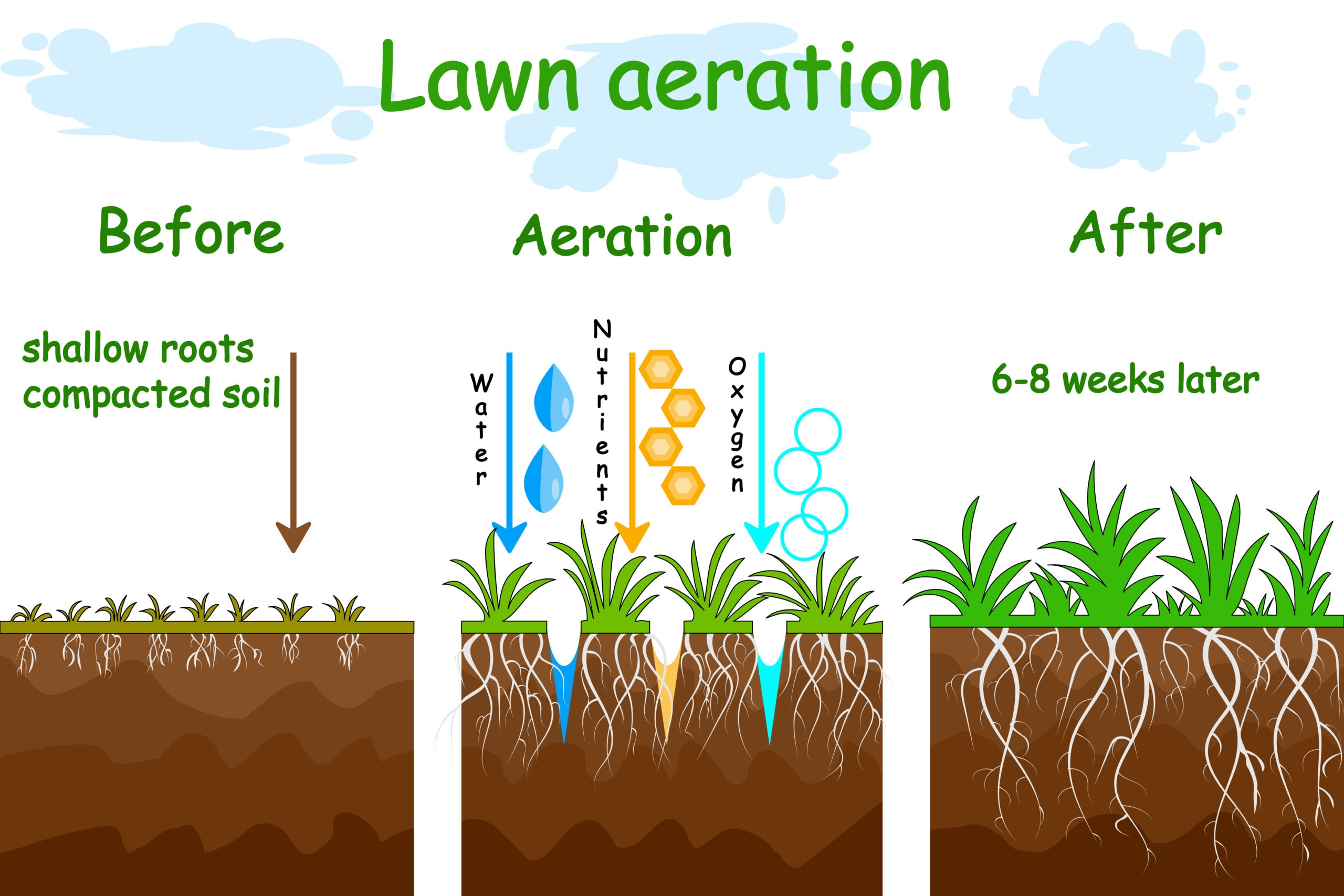 Lawn aeration stage illustration. Before and after aeration.